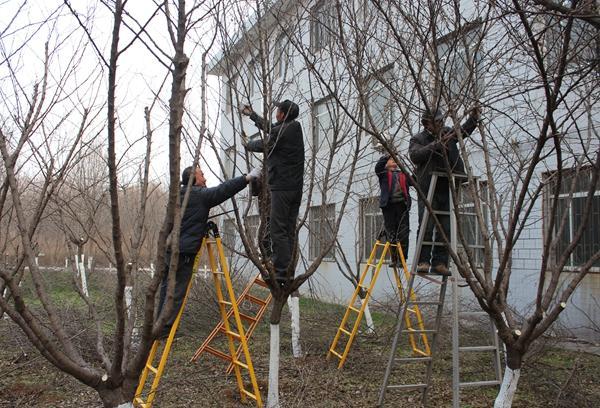 【绿化中心】冬季树木修剪工作有序开展