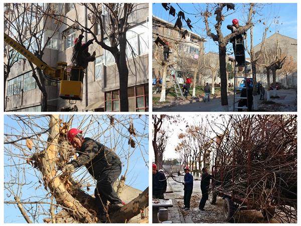 修剪小区大树 改善居住环境